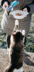 Hrană-câini-și-hrană-pisici-umedă