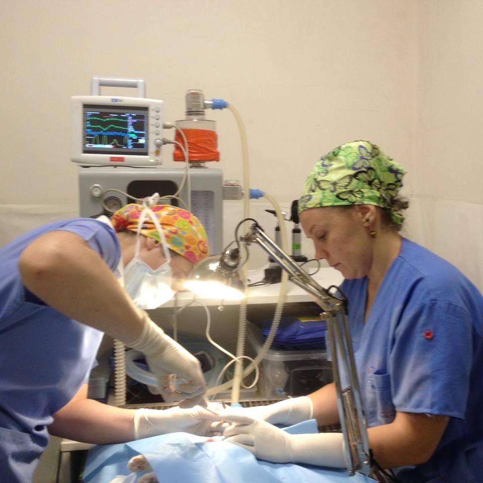 Medicină-socială-Ice-la-operație