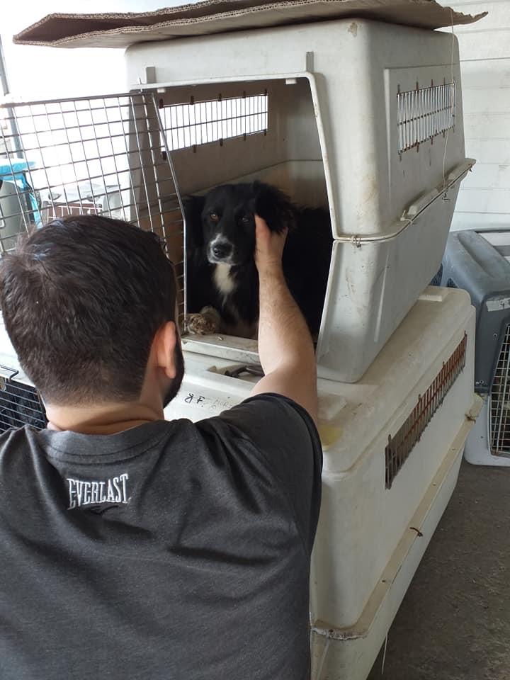 Campanie de sterilizare-Ploiești-voluntar ce mângâie cu drag un cățel în cușcă