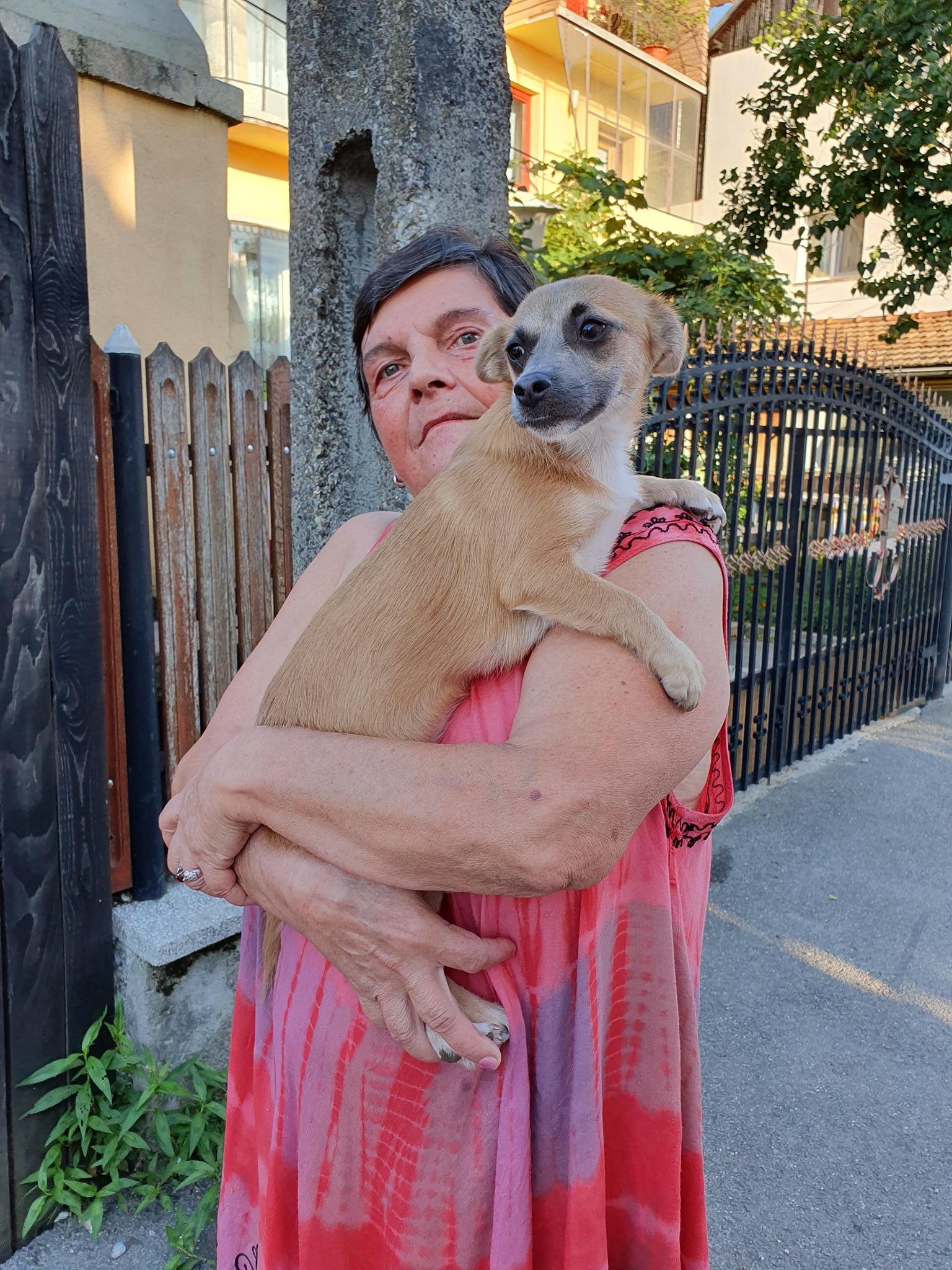 Campanie de sterilizare pisici și câini- Câmpina- un cățel cuminte își așteaptă rândul în brațele stăpânei
