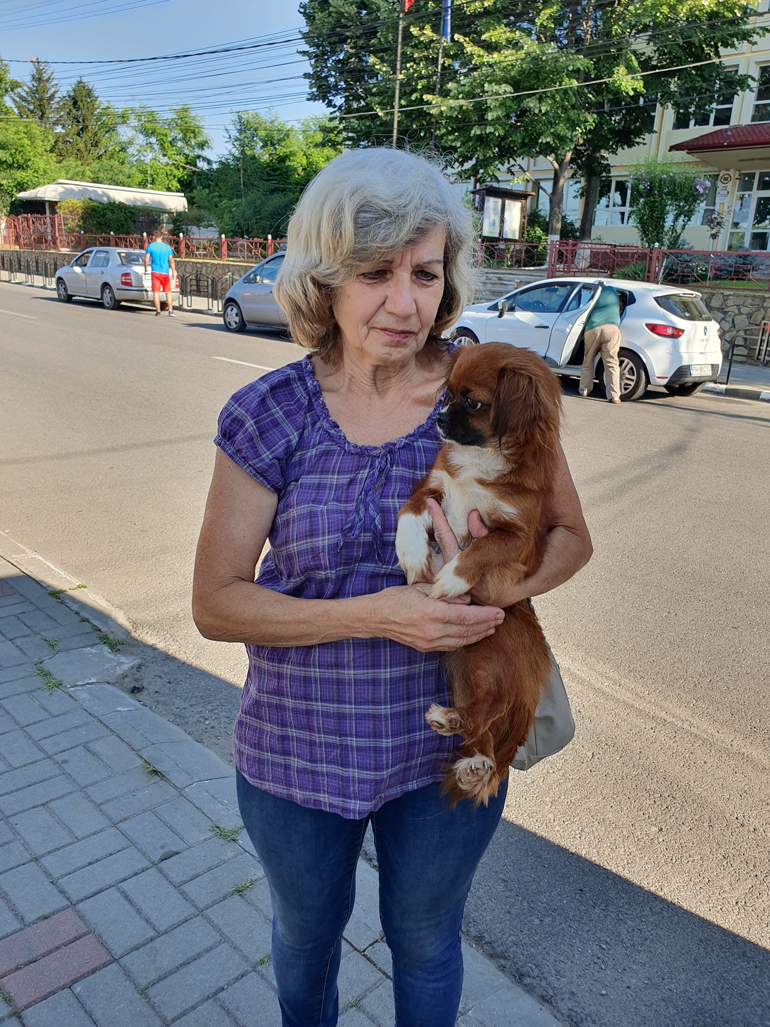 Campanie de sterilizare pisici și câini- Câmpina- câinele cuminte adus în brațe de stăpână