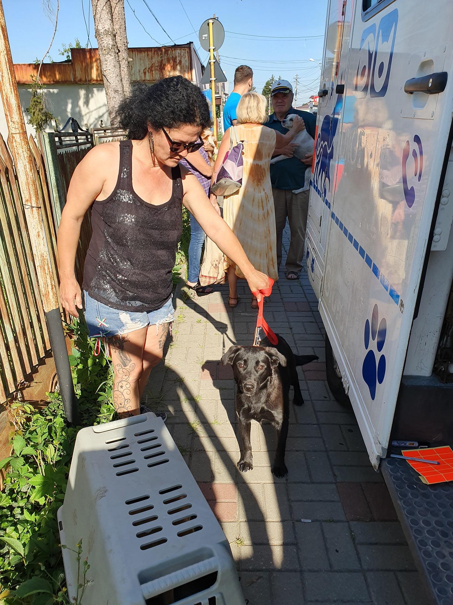 Campanie de sterilizare pisici și câini- Câmpina-cățel în așteptare lângă clinica mobilă
