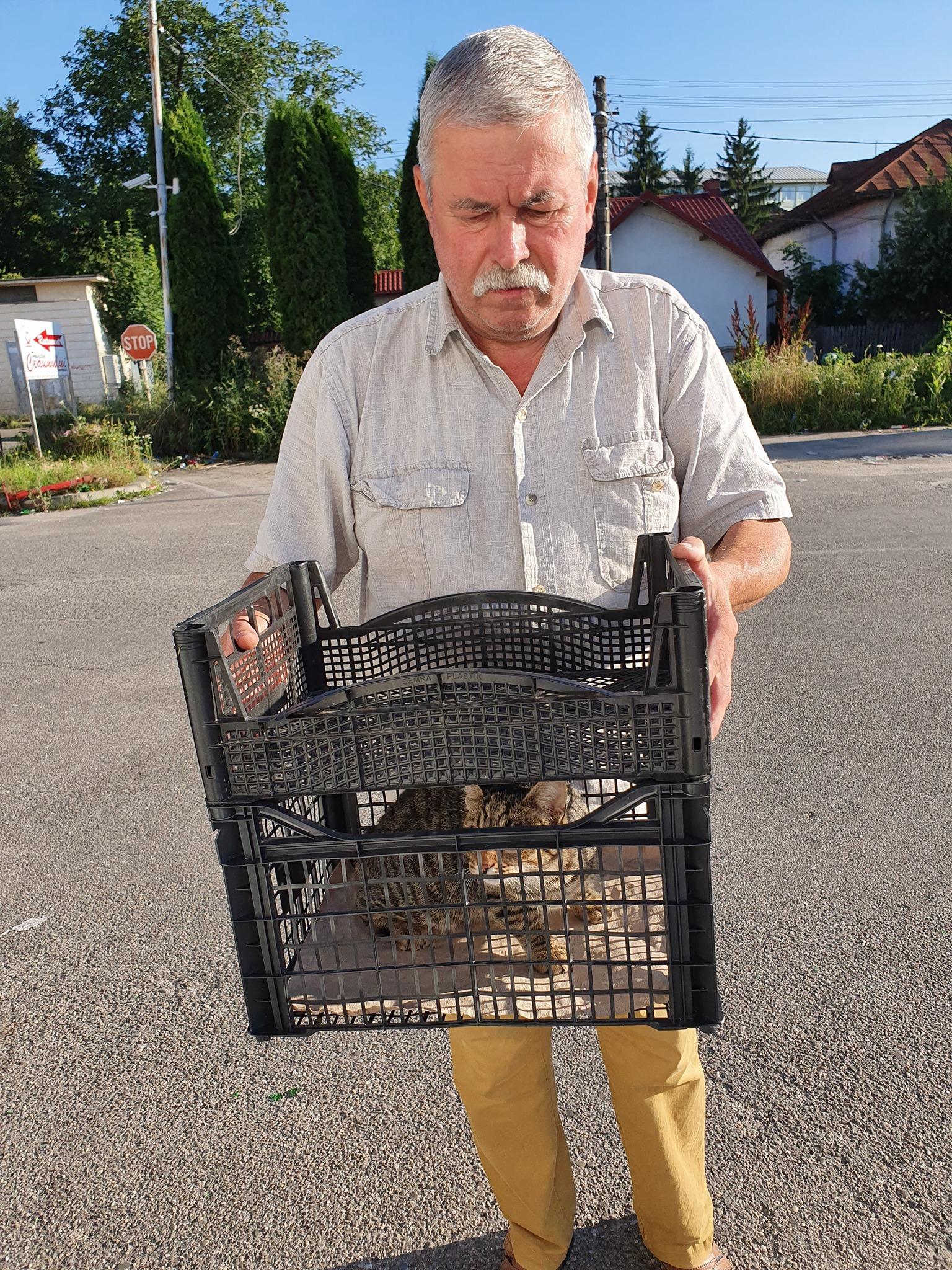 Campanie de sterilizare pisici și câini- Câmpina- pisoi adus de stăpân în lădiță de legume