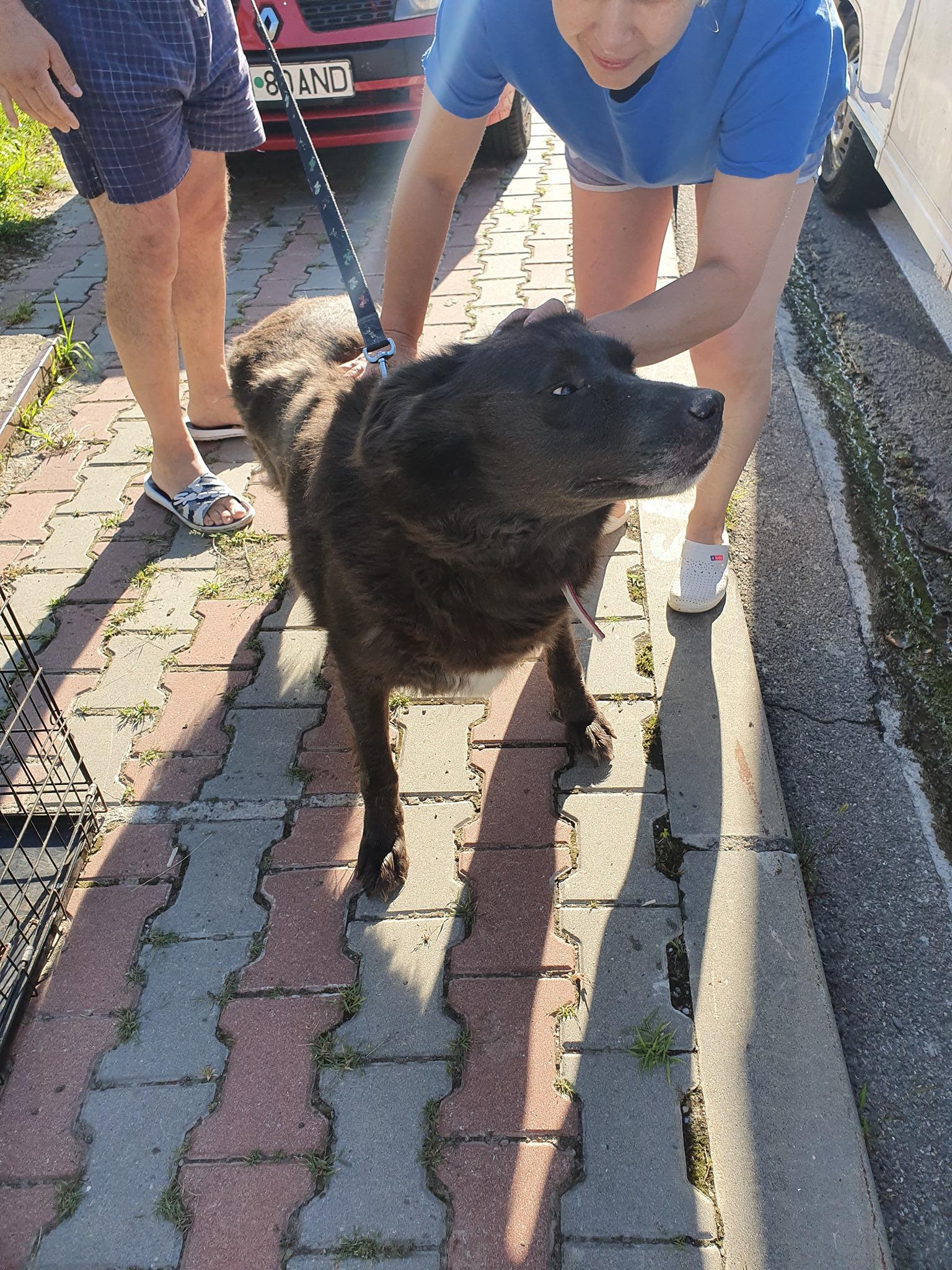 Campanie de sterilizare pisici și câini- Câmpina- câine mare ce este mângâiat pentru a se liniști