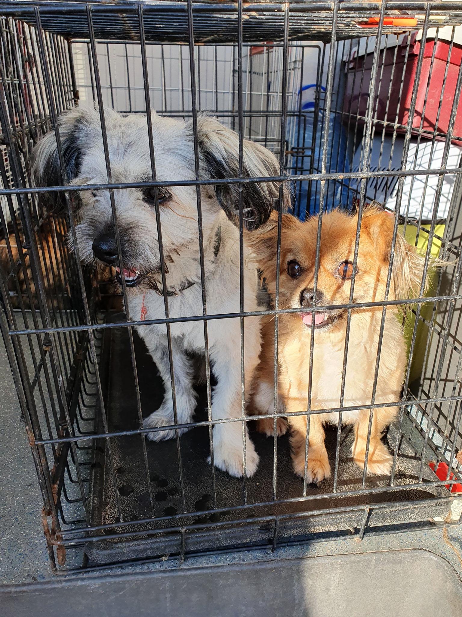 Campanie de sterilizare pisici și câini- Câmpina- cățeluși în așteptare la sterilizare