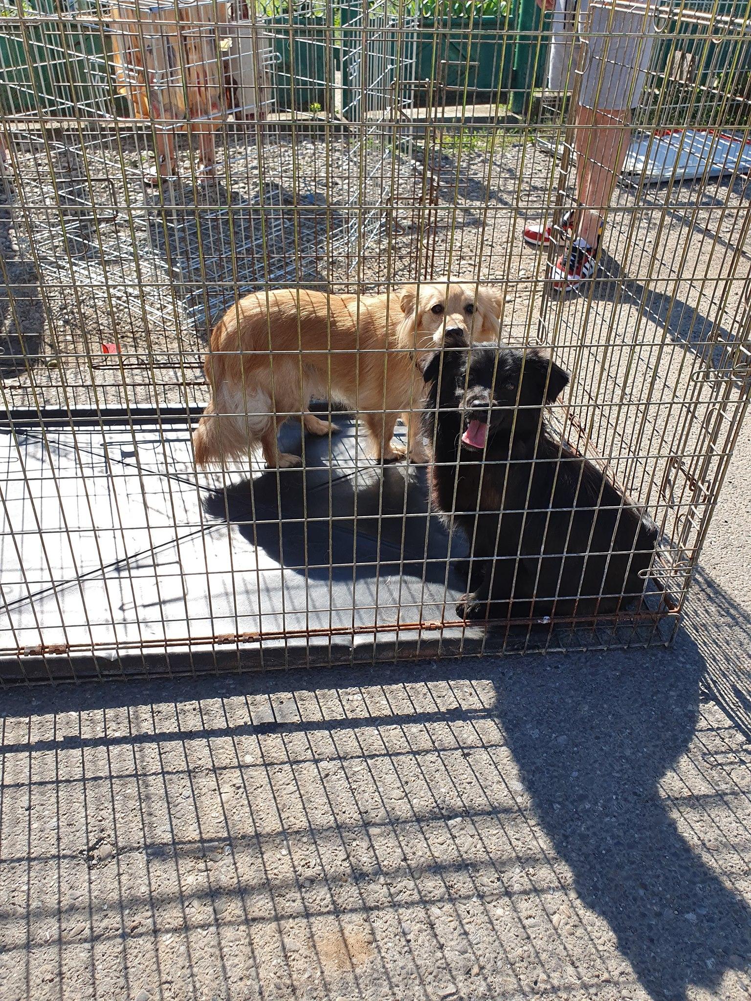 Sterilizare pisici și câini la Câmpina-câini ce așteaptă în cușcă