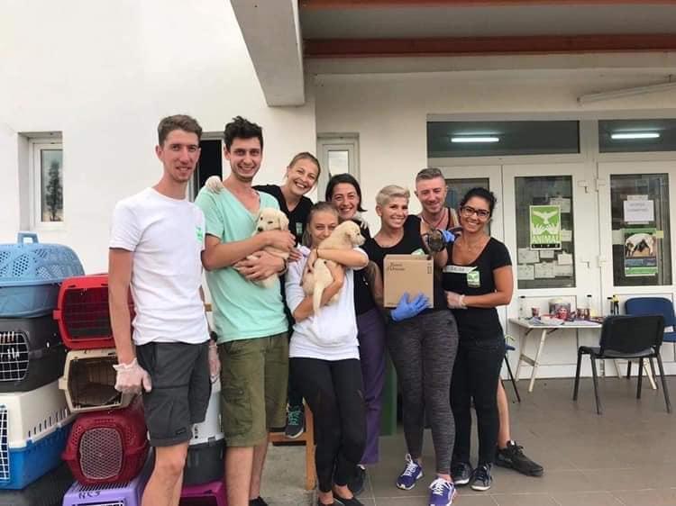 Sterilizare-câini-și-pisici-Șura-Mică-voluntari