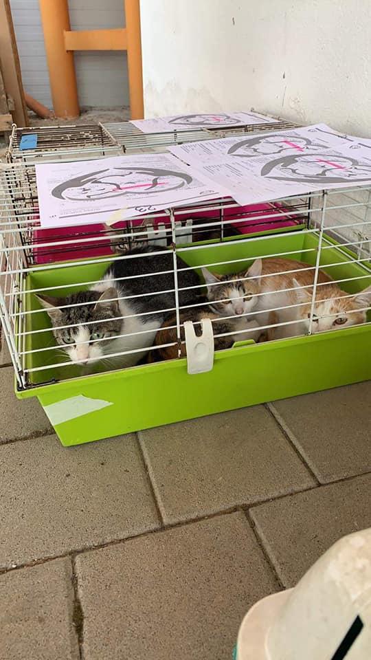 Sterilizare-câini-și-pisici-Șura-Mică
