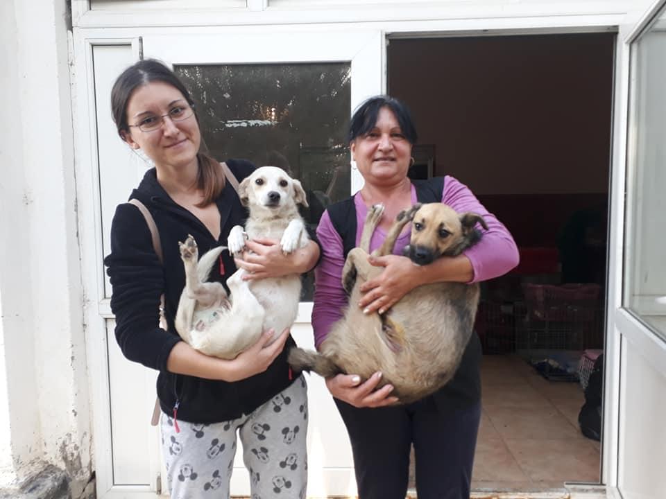 Campanie-sterilizare-câini-și-pisici-Frumușani-câini-cu-stăpâni