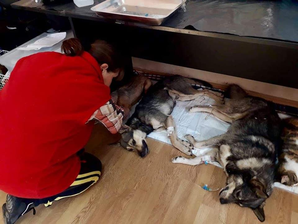 Sterilizare câini și pisici-Frumușani-căței îngrijiți și supravegheați post-operator