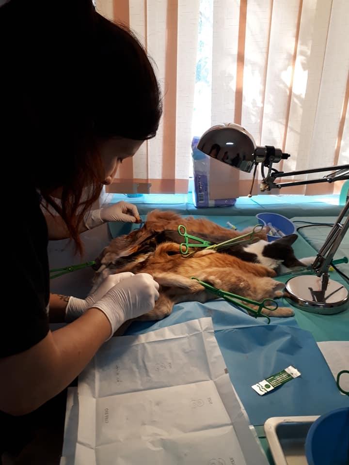 Campanie-sterilizare-câini-și-pisici-Frumușani-motani-operați
