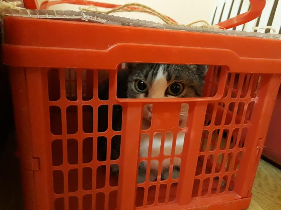 Sterilizare câini și pisici - Frumușani- pisoi adus în cușcă improvizată