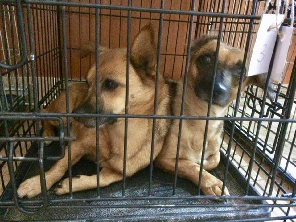 Campanie-sterilizare-câini-și-pisici-Frumușani-căței