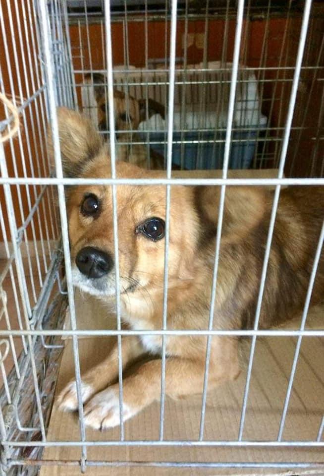Campanie de sterilizare câini și pisici-Frumușani-cățeluș curios în cușcă