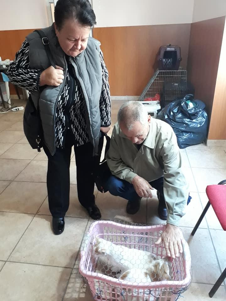 Sterilizare câini și pisici-Frumușani-pisici calmate de stăpâni în sala de așteptare