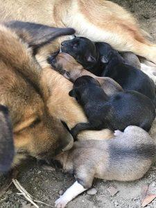 Mâncare pentru câini - pui lângă mamă
