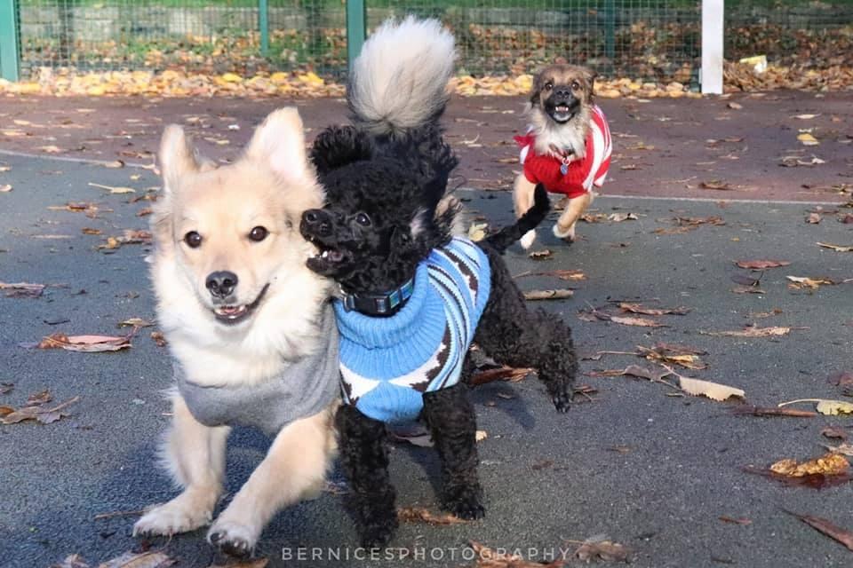 plimbare-rase-de-câini