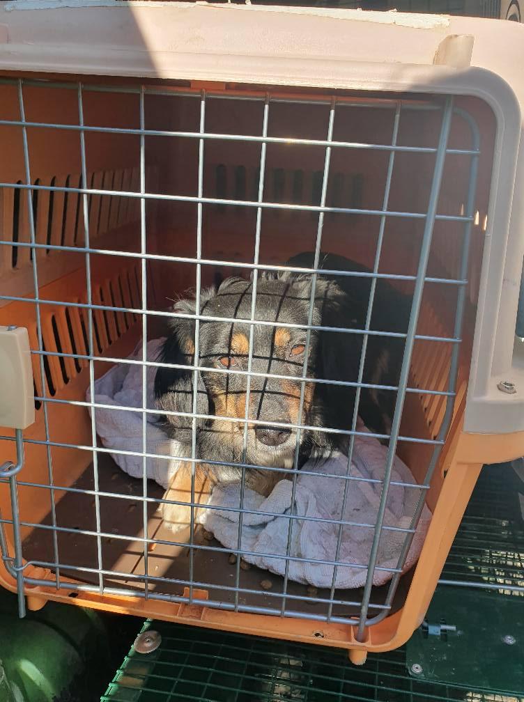 Campanie sterilizare câini la Cornu, 2-3 martie