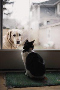 nume-de-câini-adopții-pisici