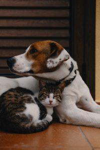 nume-de-câini-adopții-câini