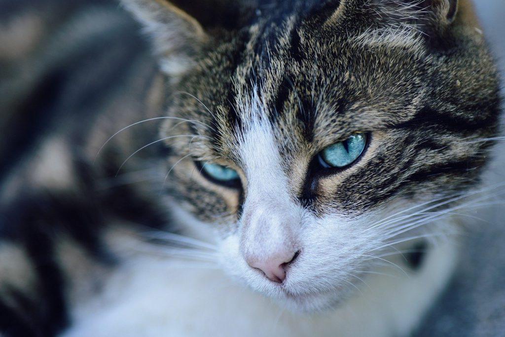 Mâncare gătită pentru câini-pisicile nu ar trebui hrănite cu mâncare gătită