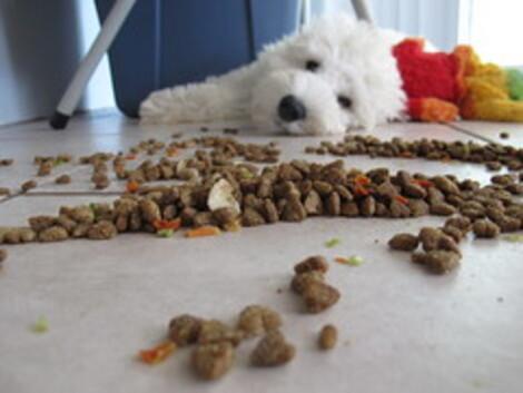 Câine lângă mâncare pentru câini pe jos