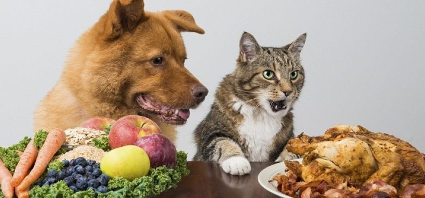 Hrană vegetariană pentru câini, carne pentru pisici