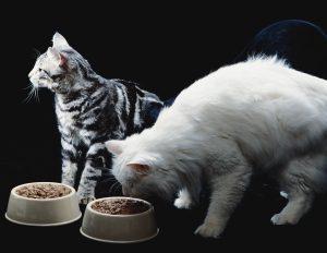 Hrană-câini-și-hrană-pisici-uscată