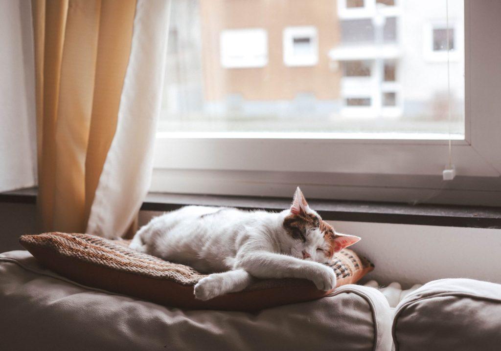 pisici-și-câini-seniori