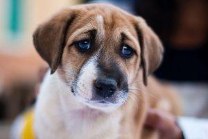 vaccinare-câine-și-pisică