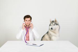 Medicul veterinar stabilește dieta terapeutică