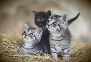 pisici-și-câini-juniori