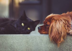 Scăpați de călduri, câinii și pisiicile stau aproape de casă
