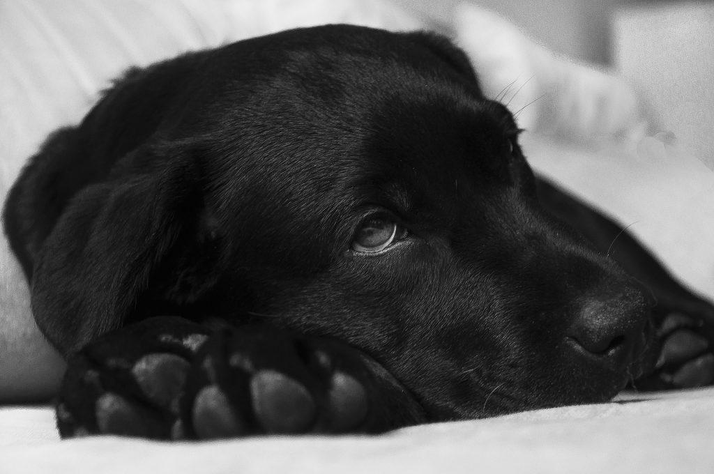Alergii alimentare la câini