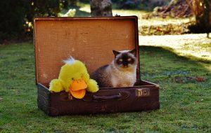 Pisica poate fi o companie plăcută în vacanță