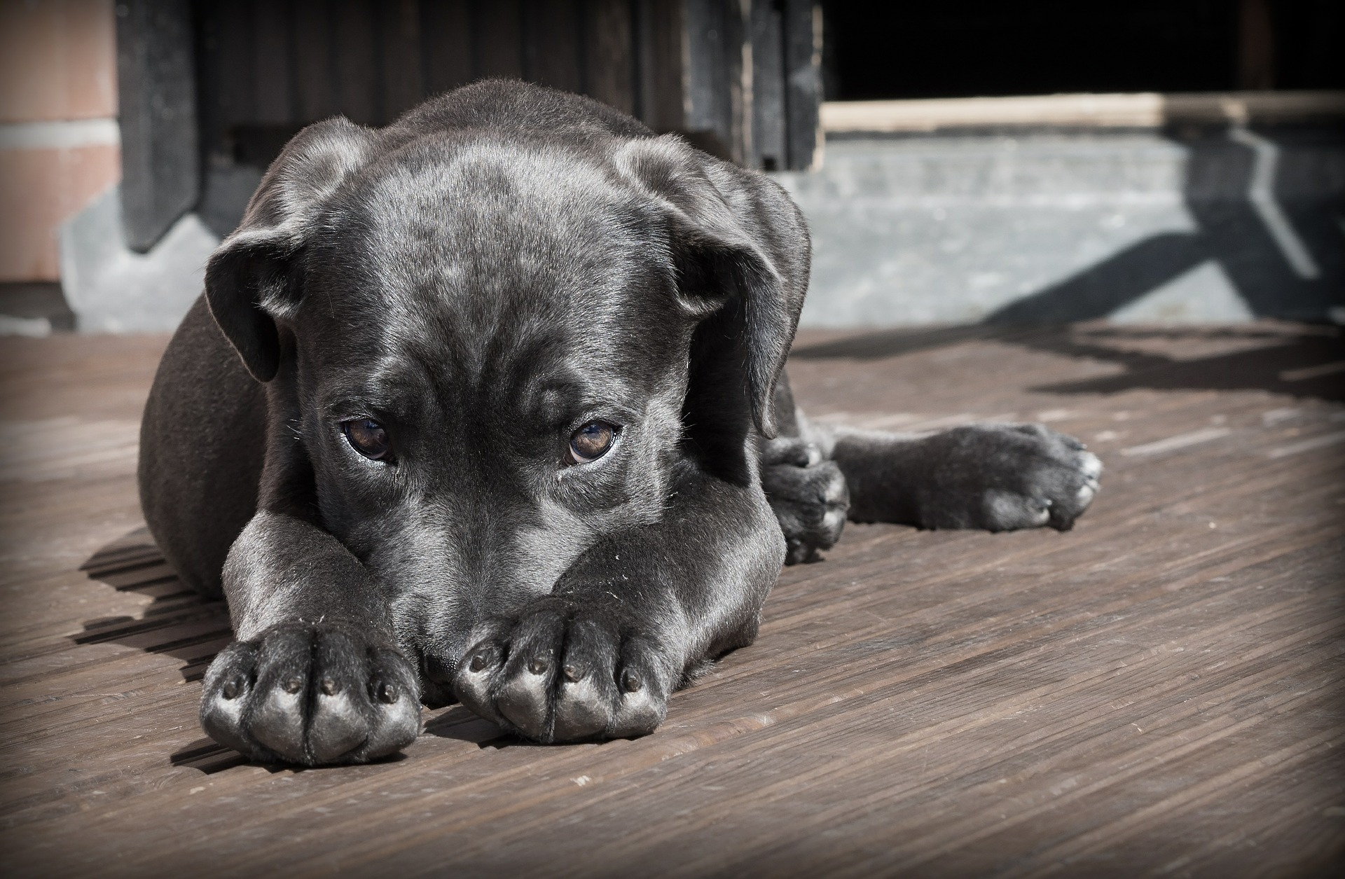 studiu de pierdere în greutate canină