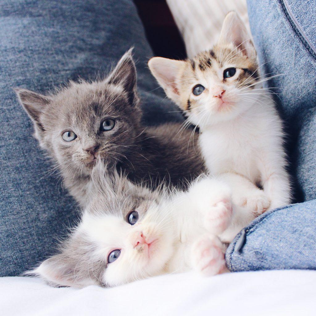 vaccinare-câini-și-pisici